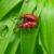 Mechaniczne, biologiczne i chemiczne sposoby walki ze szkodnikami